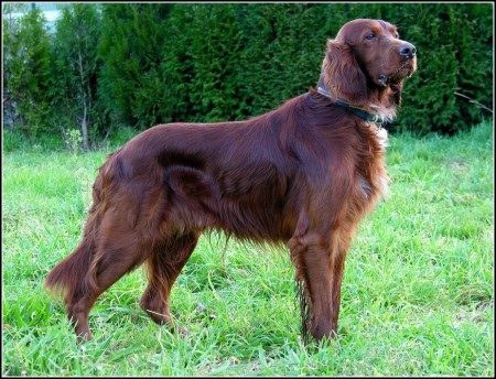 Types Of Hunting Dogs With Pictures
