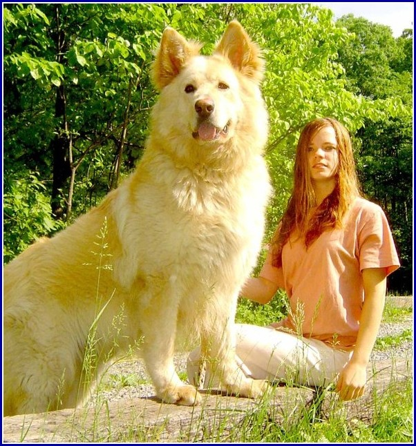 Very Large Dog Breeds Pictures