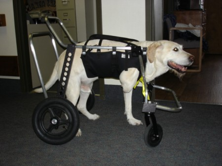 Wheelchairs For Dogs Australia