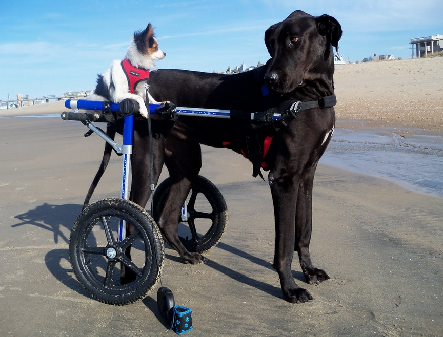 Wheelchairs For Dogs In South Africa