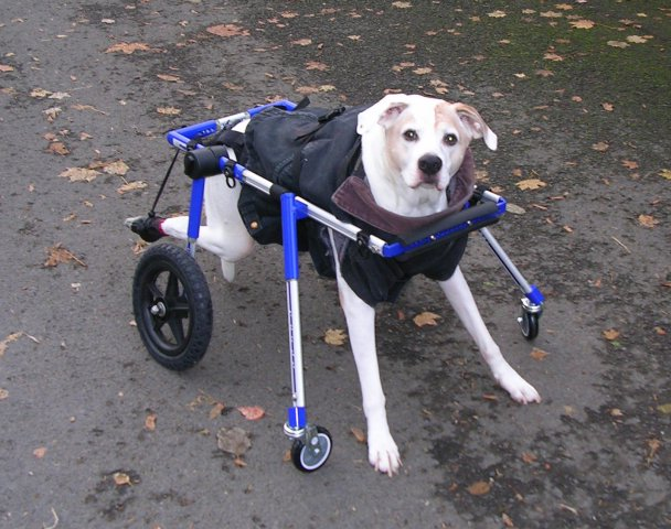 Wheelchairs For Dogs Uk