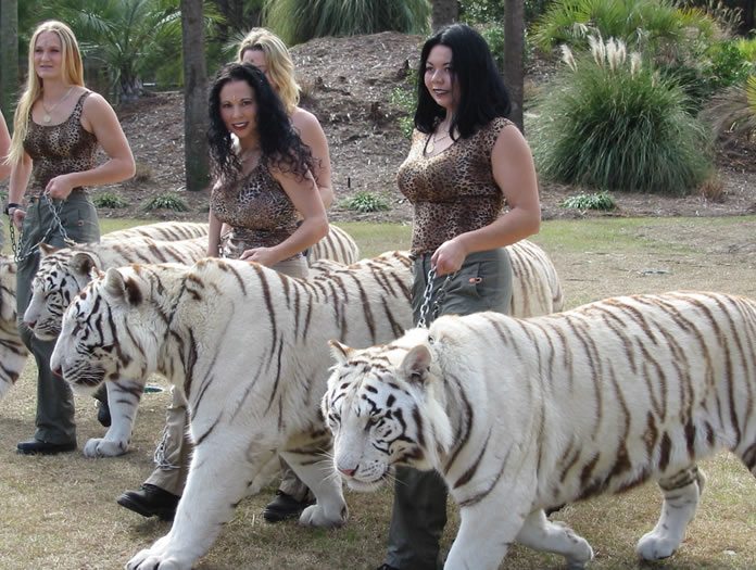 White Tiger Facts And Pictures