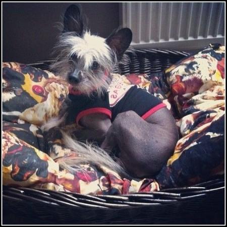 Wicker Dog Bed Ikea