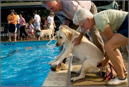 Denver Dog Parks With Water