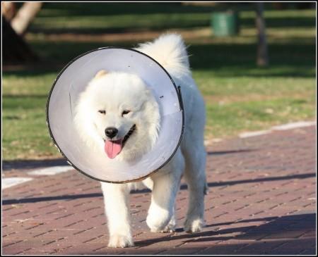 Elizabethan Collar For Dogs Petsmart