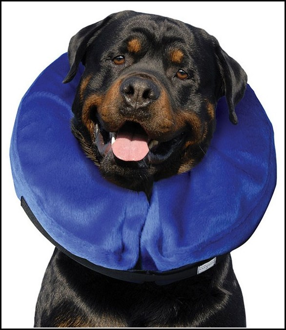 Elizabethan Collar For Dogs Walmart