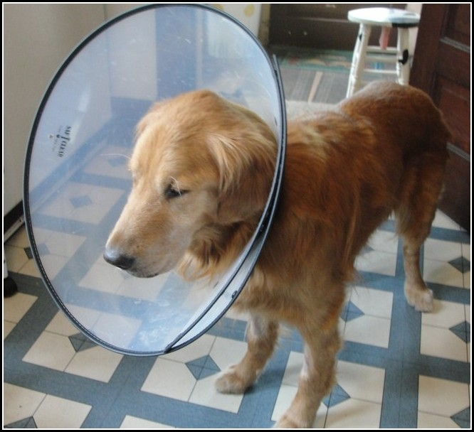 Homemade Elizabethan Collar For Dogs