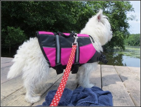 Life Vest For Dogs At Petsmart