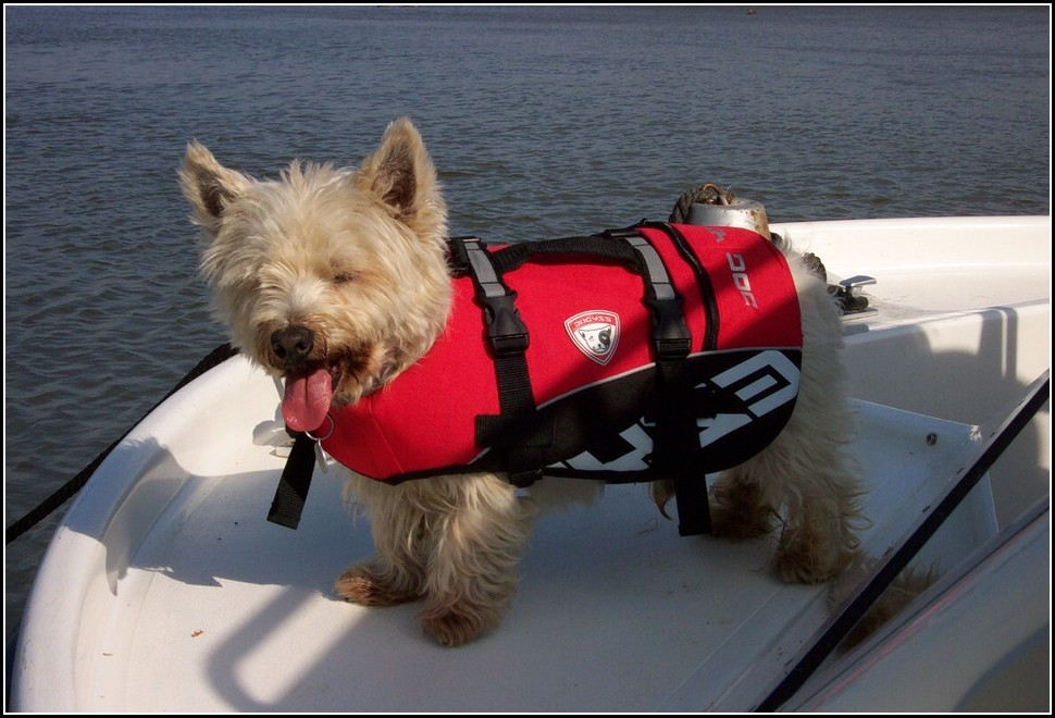 Life Vest For Dogs Petco