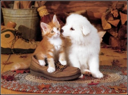 Pictures Of A Dog And A Cat Together