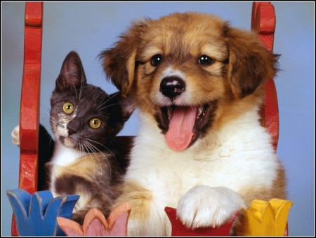 Pictures Of A Dog And Cat