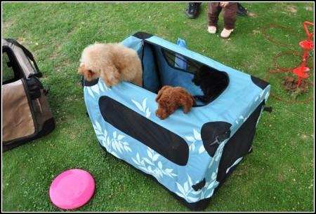 Soft Dog Crates Petsmart