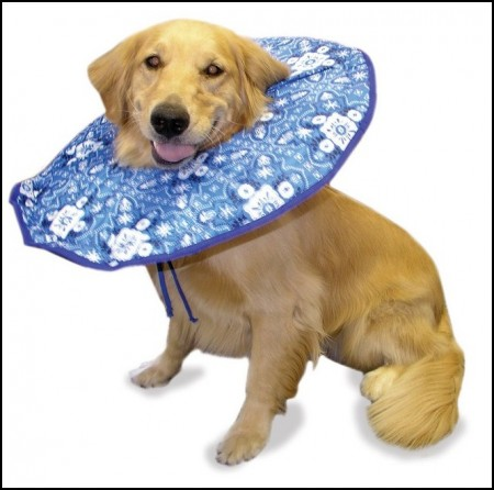 Diy Elizabethan Collar For Dogspet Photos Gallery Dog