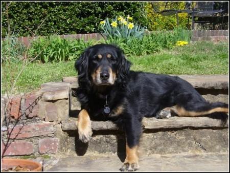 Dog Adoption Atlanta Ga