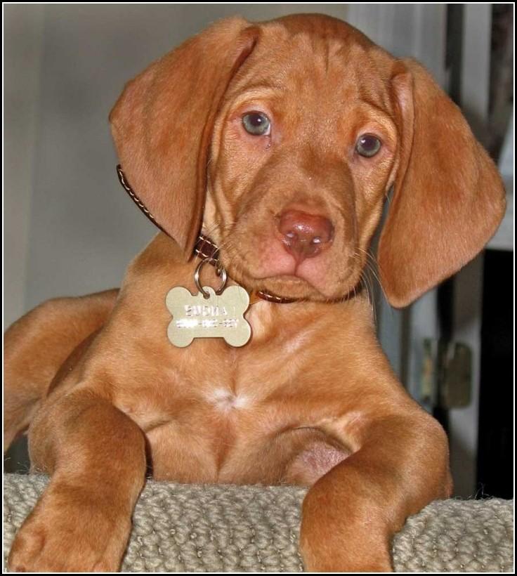 Dog Adoption Atlanta Georgia