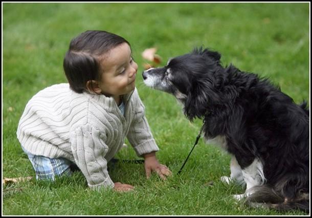 Dog Asthma Attack Symptoms