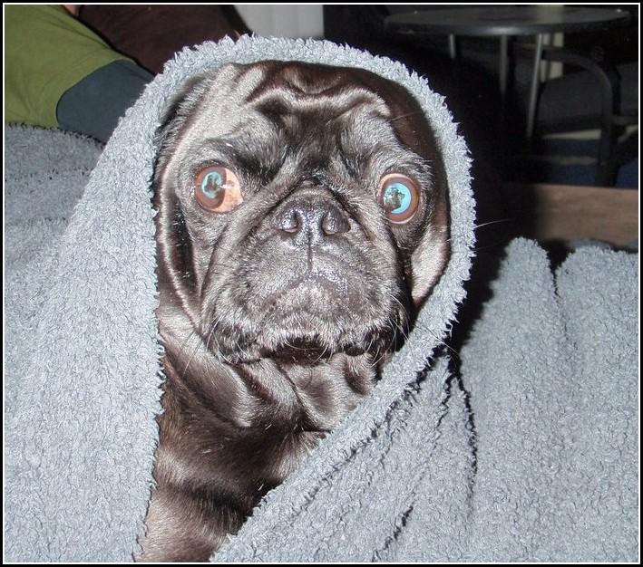 Dog Ear Wash Boric Acid