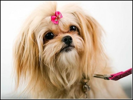Dog Ear Wash For Mites