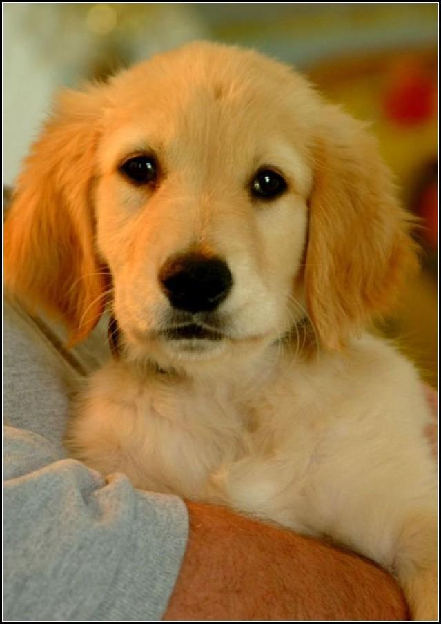 Dog For Free Adoption