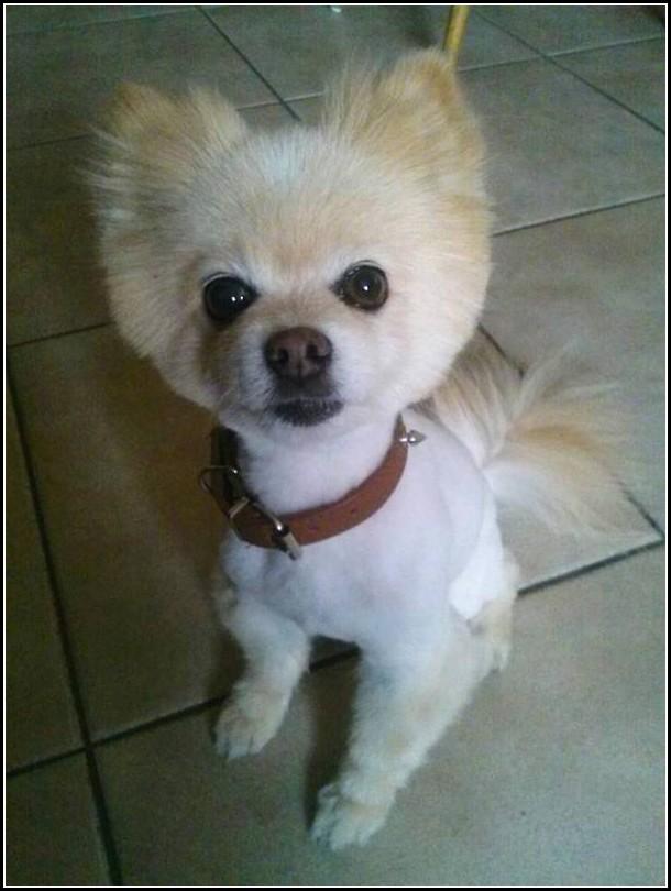 Dog For Free Durham Craigslist