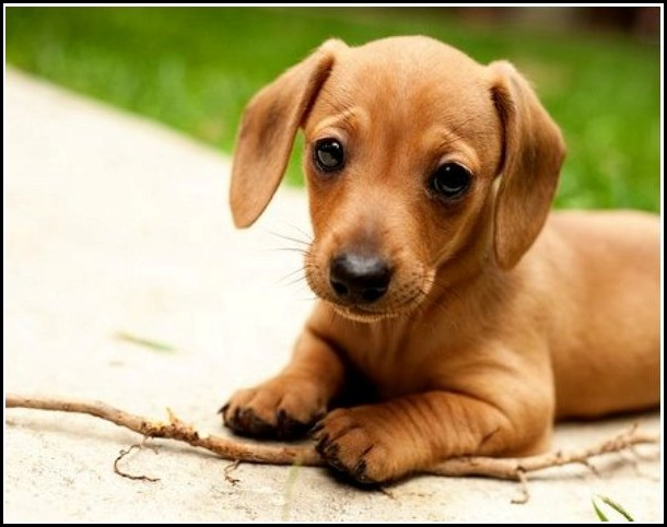 Download Pics Of Cute Dogs