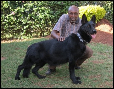 Family Guard Dogs Breeds