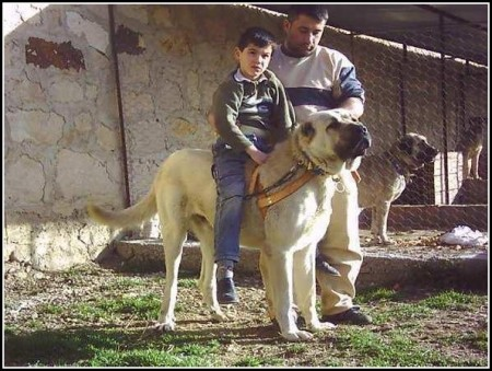 Family Guard Dogs Good With Children