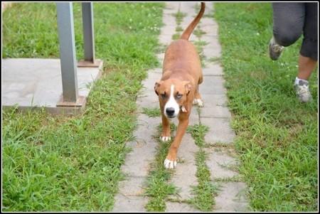 Lap Dog Rescue Facebook