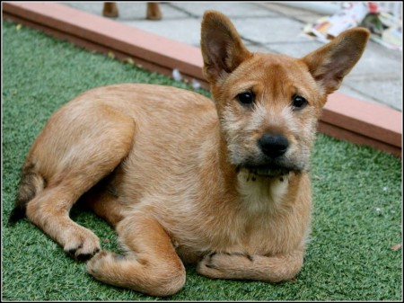 Lap Dog Rescue Hong Kong