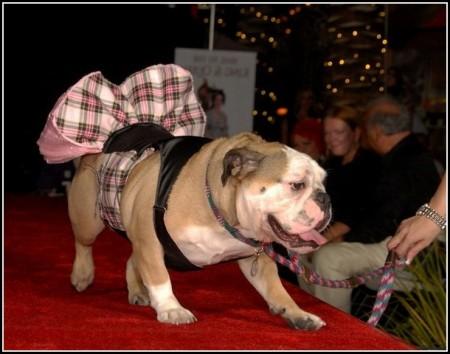 Lap Dog Rescue Las Vegas
