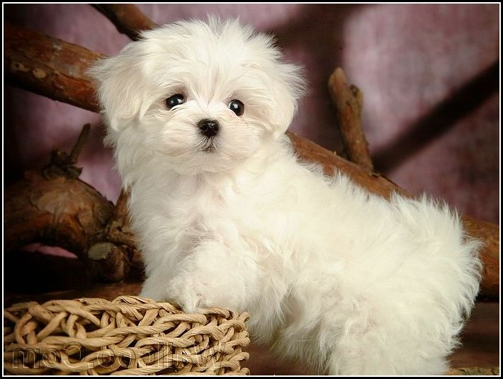 Latest Pics Of Cute Dogs