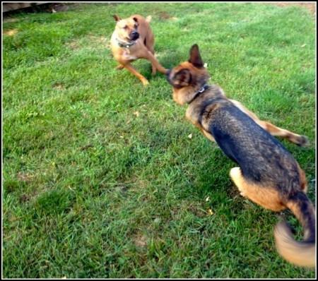 Off Leash Dog Training Michigan