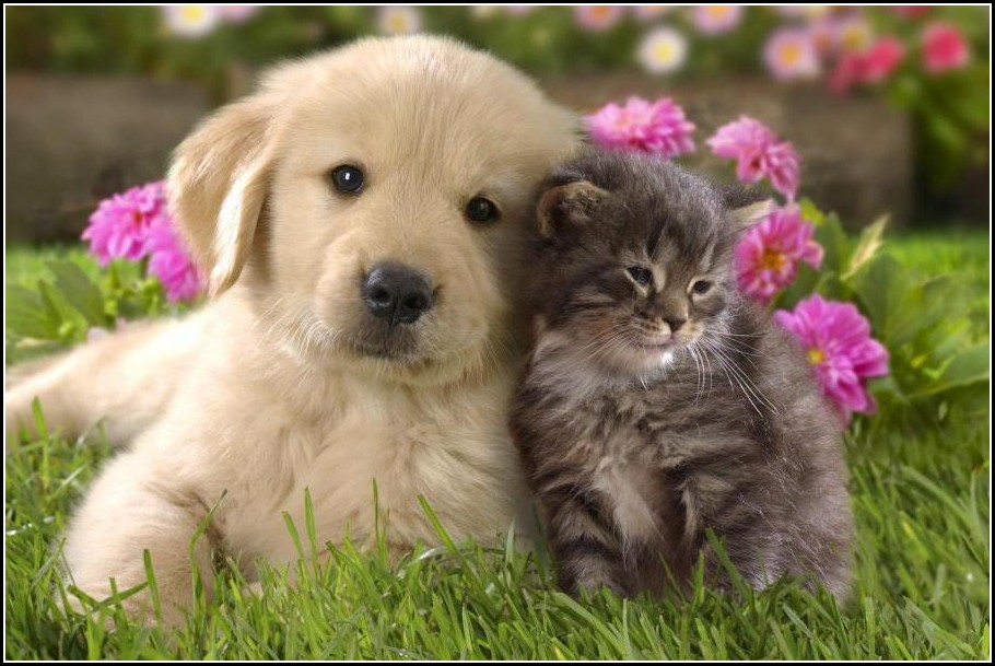 Pics Of Cute Dogs And Cats