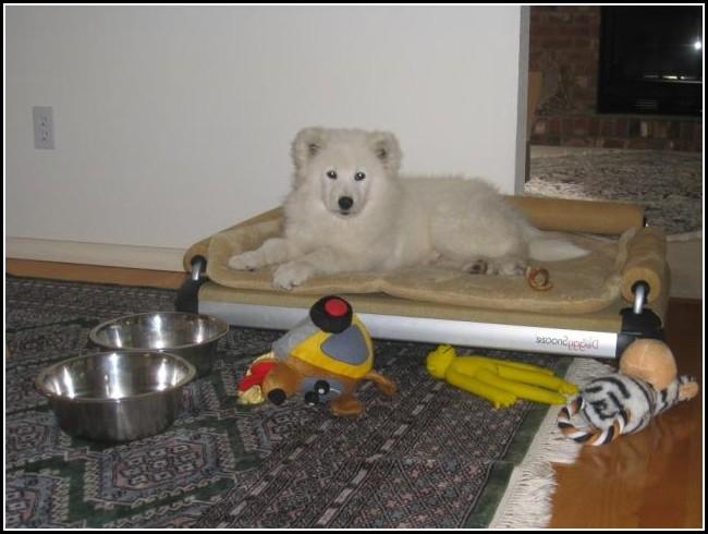Bolster Dog Bed Australia
