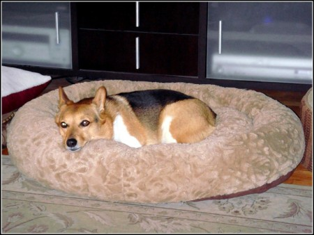 Bolster Dog Bed Costco