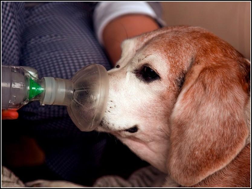 Bronchitis In Dogs Symptoms