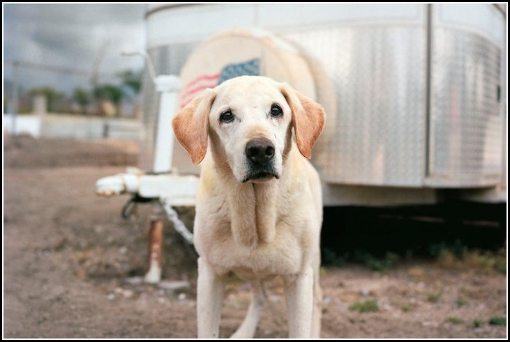 Dog Adoption Vacaville Ca