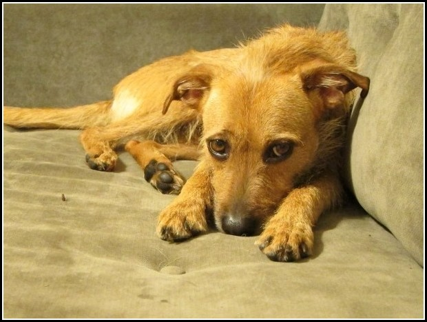 Dog Adoption Valencia Ca