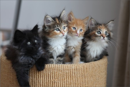All Types Of Kittens