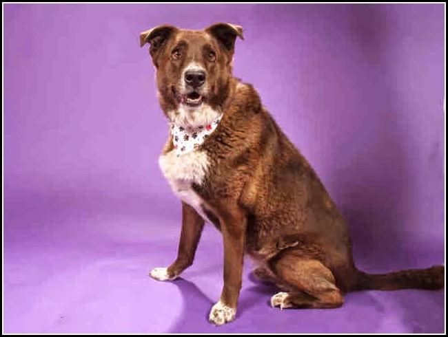 Buddy Dog Humane Society Reviews