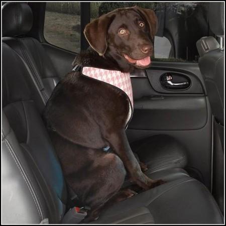 Car Dog Barrier Petsmart
