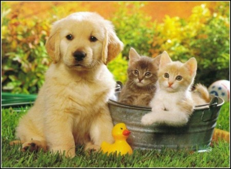 Cats And Kittens And Dogs
