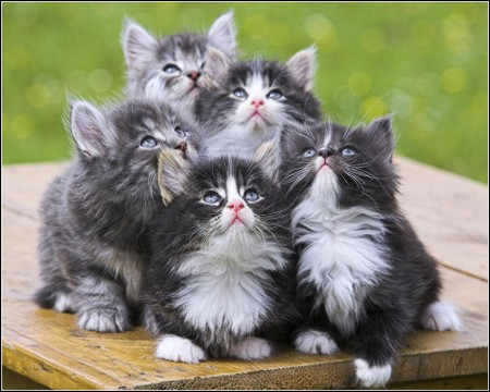 Cute Kitten Pictures Funny