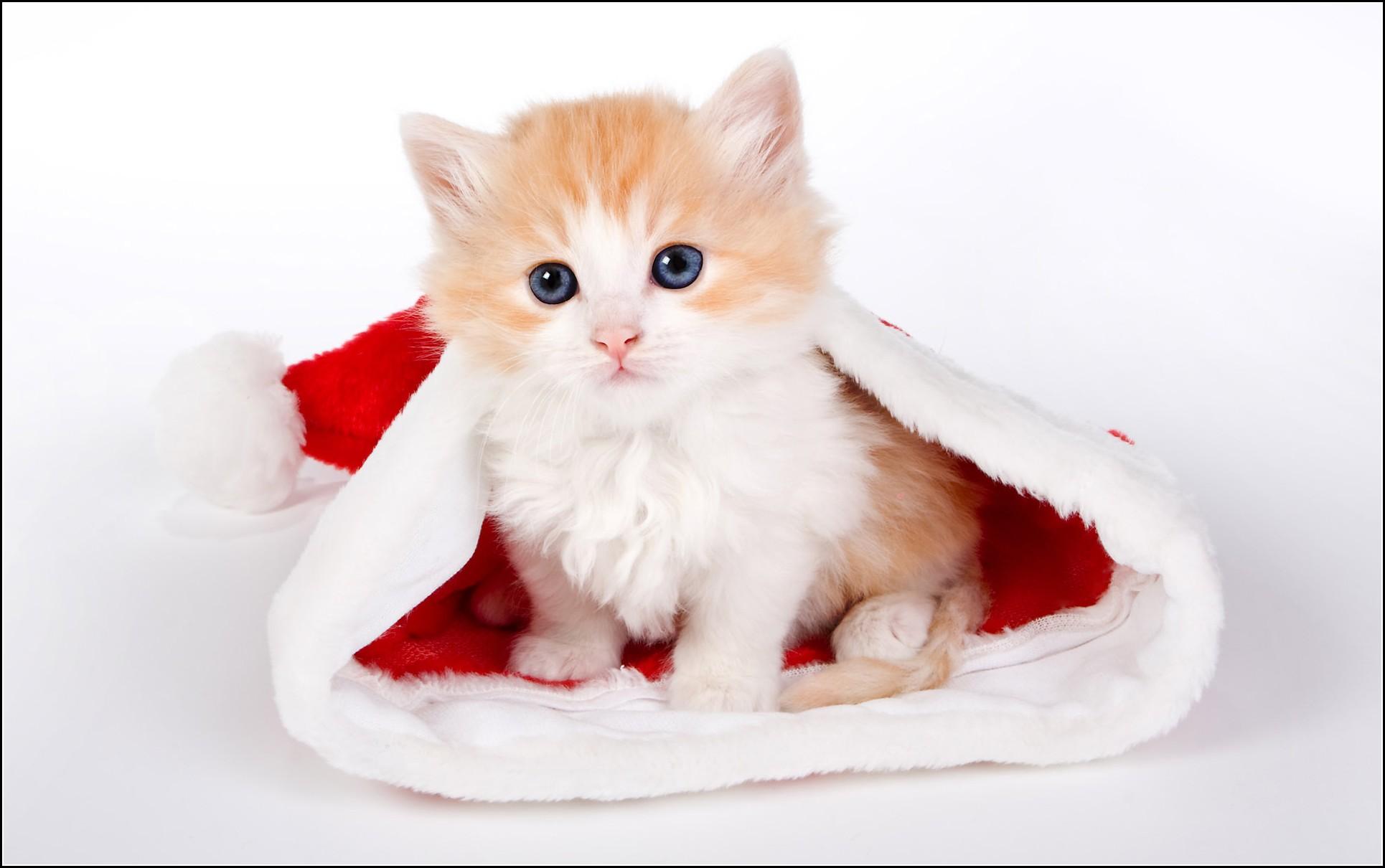 Cute Kitten Pictures Tumblr