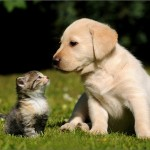Cute Pictures Of Baby Kittens And Puppies