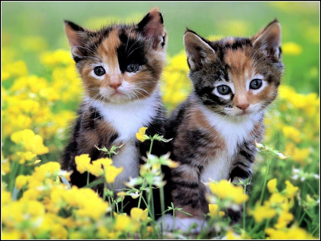 Cute Pictures Of Baby Kittens