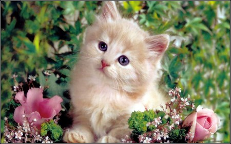 Cute Types Of Kittens