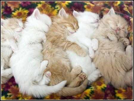 Different Types Of Kittens With Pictures