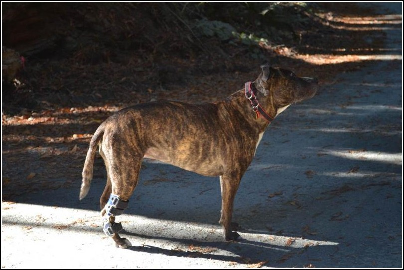 Dog Acl Brace Canada