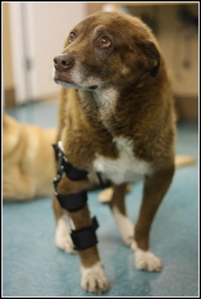 Dog Acl Brace Uk